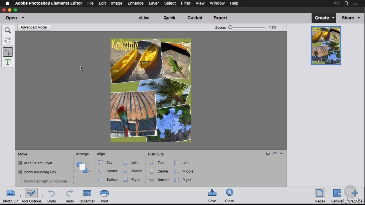 Photoshop Elements基础学习视频教程 - Photoshop Elements Fundamentals