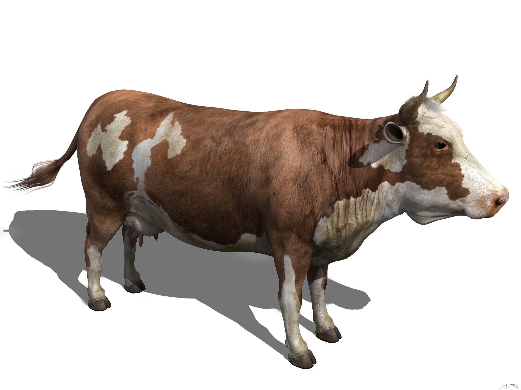 母牛高模3d模型下载 - cow hi-res 3d model