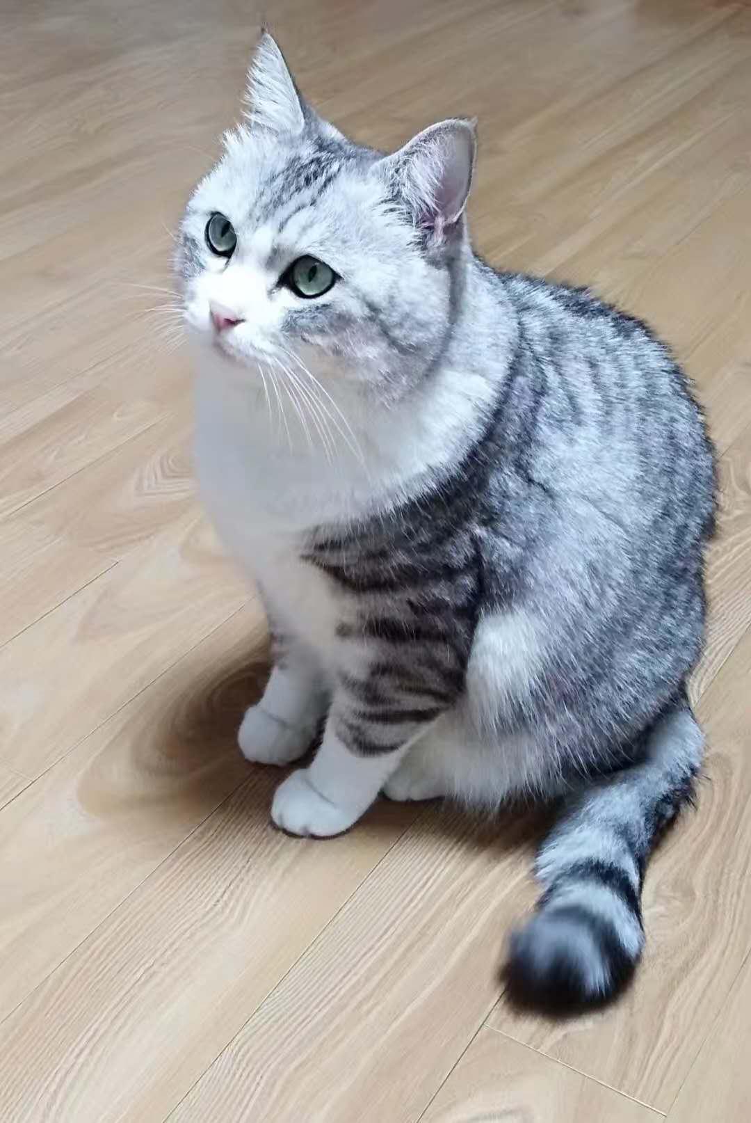 cgwell猫尾巴又来了 - MAYA建模插件-安装和启动说明 GIF动图分享13 作者:海外CG人才猎头 帖子ID:89444